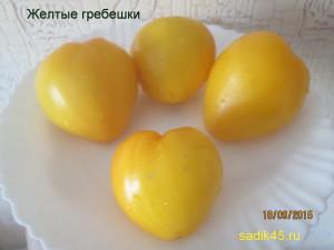 желтые гребешки11 (5)