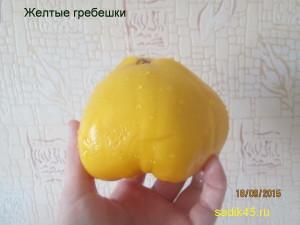 желтые гребешки11 (6)