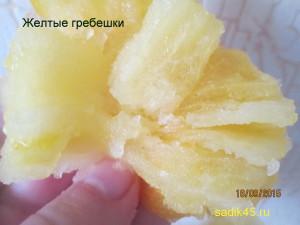 желтые гребешки11 (9)