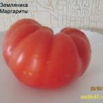 земляника маргариты1 (1)