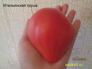 итальянская груша1 (2)