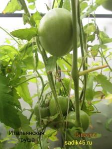 итальянская груша1