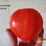 итальянская груша1 (5)