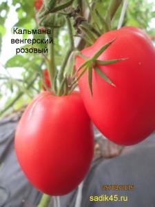 кальмана венгерский розовый1 (1)