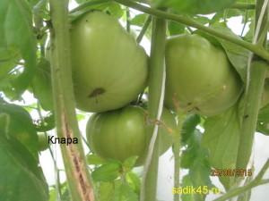 клара1 (1)