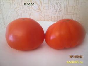 клара1 (2)