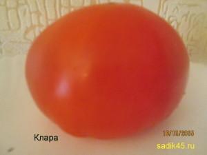 клара1 (3)