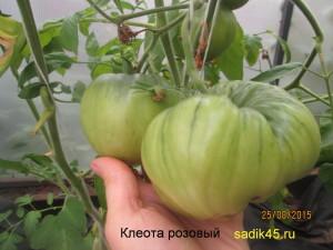 клеота1 (2)