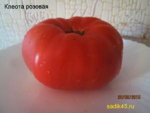клеота1 (6)