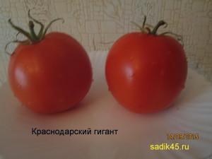 краснодарский гигант1 (3)