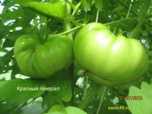 красный генерал1 (1)