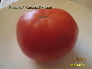 красный канзас лилиан (2)