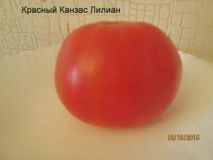 красный канзас лилиан (3)