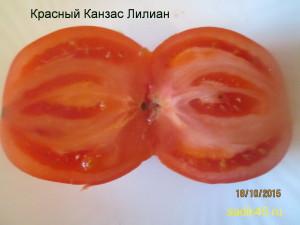 красный канзас лилиан (4)
