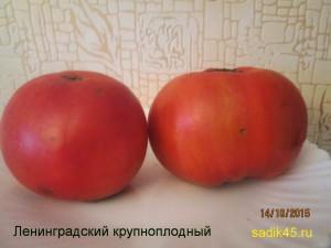 ленинградский крупноплодный (8)