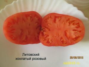 литовский хохлатый 1 (10)