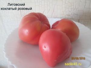 литовский хохлатый 1 (9)