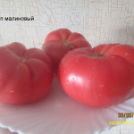 олимп малиновый 1 (10)