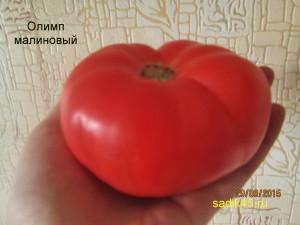 олимп малиновый 1 (8)