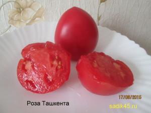 роза ташкента 1 (3)