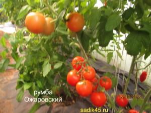 румба ожаровский 12 (8)