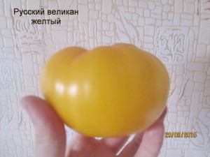 русский великан желтый 1 (8)