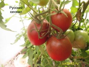 русский кинжал 1 (8)