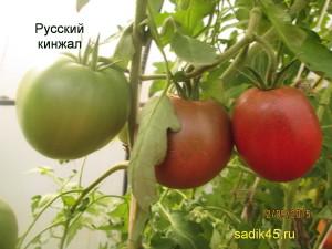 русский кинжал 1 (9)