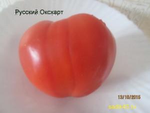 русский оксхарт 1 (4)