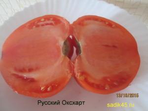 русский оксхарт 1 (7)