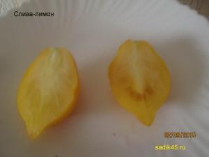 слива лимон 1
