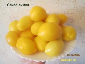 слива лимон 1 (7)