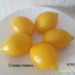 слива лимон 1 (8)
