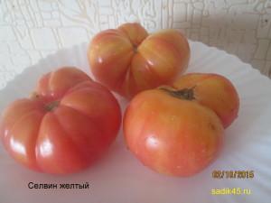 селвин желтый 1 (4)