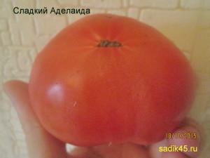 сладкий аделаида (2)