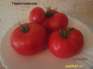 терентьевские (3)