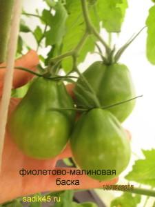 фиолетово-малиновая баска 1 (3)