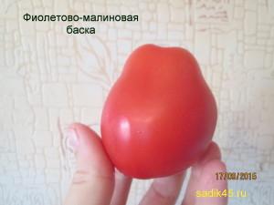 фиолетово-малиновая баска 1 (9)