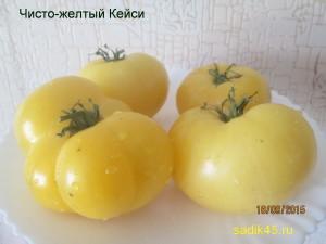 чисто-желтый кейси 1 (13)