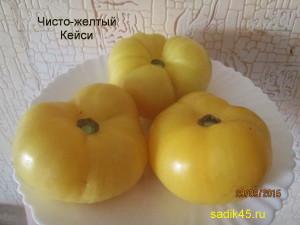 чисто-желтый кейси 1 (2)