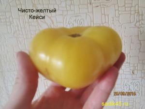 чисто-желтый кейси 1 (3)