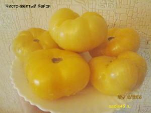 чисто-желтый кейси 1 (8)