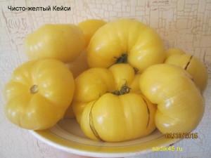 чисто-желтый кейси 1 (9)