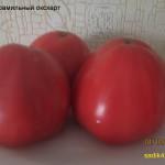 эрди фамильный оксхарт (9)