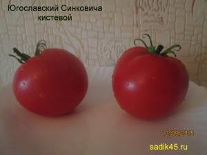 югославский синковича кистевой 1