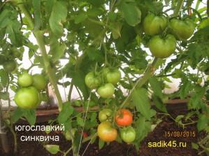 югославский синковича 2 (1)