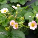 мерлан (3)