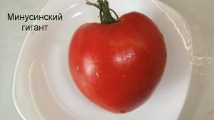 минусинский гигант (10)