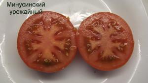 минусинский урожайный 1 (3)