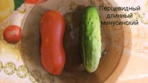 перцевидный длинный минусинский 11) (2)